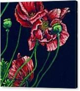Kara's Poppies Canvas Print