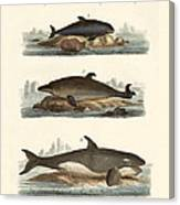 Kinds Of Whales Canvas Print