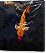 Koi Carps Canvas Print