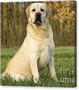 Labrador Retriever Dog Canvas Print