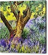 Lavender And Olive Tree Canvas Print