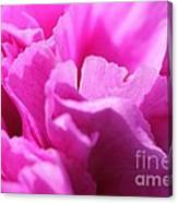 Lavender Carnation Canvas Print