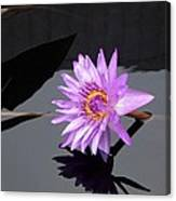 Lavender Lily Canvas Print