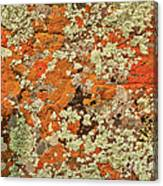 Lichen Abstract Canvas Print