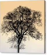 Lone Tree In Field Canvas Print