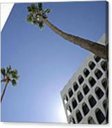 Looking Up In Beverly Hills Canvas Print