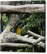 2 Macaws Framed By Tree Branches Inside The Jurong Bird Park Canvas Print