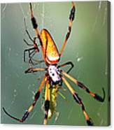 Male And Female Silk Spiders With Prey Canvas Print