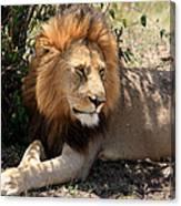 Male Lion On The Masai Mara  Canvas Print