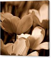 Many Tulips Canvas Print
