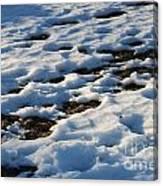 Melting Snow On Lawn Canvas Print