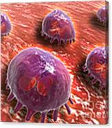 Microscopic View Of Phagocytic Canvas Print