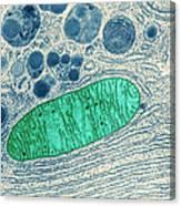 Mitochondrion, Tem Canvas Print