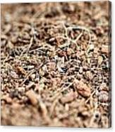 Mulch Canvas Print