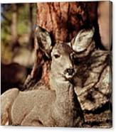 Mule Deer Doe Canvas Print