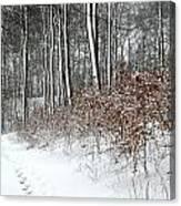Nature In Winter Under Snow In Denmark Canvas Print
