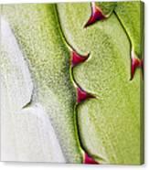 Natures Ornaments Canvas Print