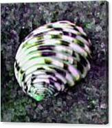 Nerita Versicolor Four-tooth Nerite Shell Canvas Print