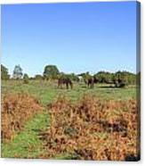 New Forest Canvas Print