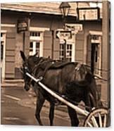 New Orleans - Bourbon Street Horse 3 Canvas Print