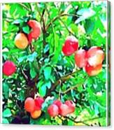 Orange Trees With Fruits On Plantation Canvas Print