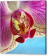 Pink Orchid Flower Details Canvas Print