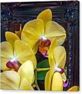 Orchid Flowers Growing Through Old Wooden Picture Frame Canvas Print