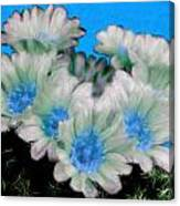 Painterly Cactus Flowers Canvas Print