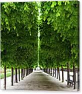 Palais Royal Trees Canvas Print