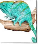Parsons Chameleon Canvas Print
