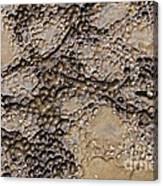 Patterns In Dolostone Coastal Rocks Canvas Print