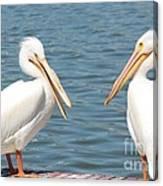 Pelican Pals Canvas Print