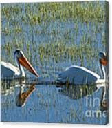 Pelicans In Hayden Valley Canvas Print