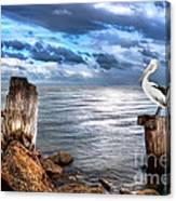 Pelican's Pride Canvas Print