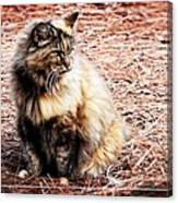 Pine Needle Kitty Canvas Print