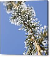 Pine Tree Branch Canvas Print
