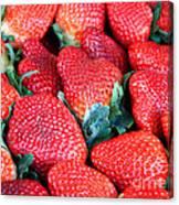 Plant City Strawberries Canvas Print
