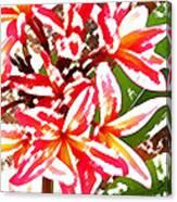 Plantation Plumeria Canvas Print