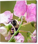 Pollination Nation II Canvas Print