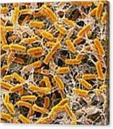 Pond Bacteria Canvas Print