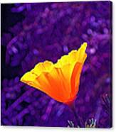 Poppy 2 Canvas Print