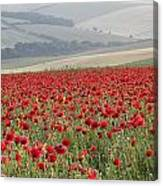 Poppy Field Landscape In Summer Countryside Sunrise Canvas Print