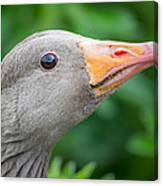 Portrait Of Greylag Goose, Iceland Canvas Print