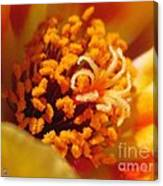 Portulaca In Orange Fading To Yellow Canvas Print