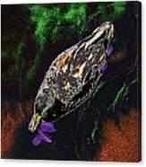 Psychedelic Mallard Duck 1 Canvas Print