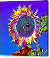 Psychedelic Sunflower Canvas Print