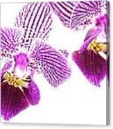 Purple Orchid-5 Canvas Print