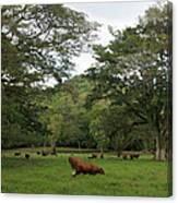 Rainforest At Ys River Canvas Print
