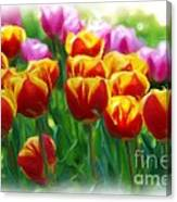 Red And Yellow Tulips Canvas Print