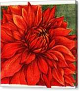 Red Mums Canvas Print